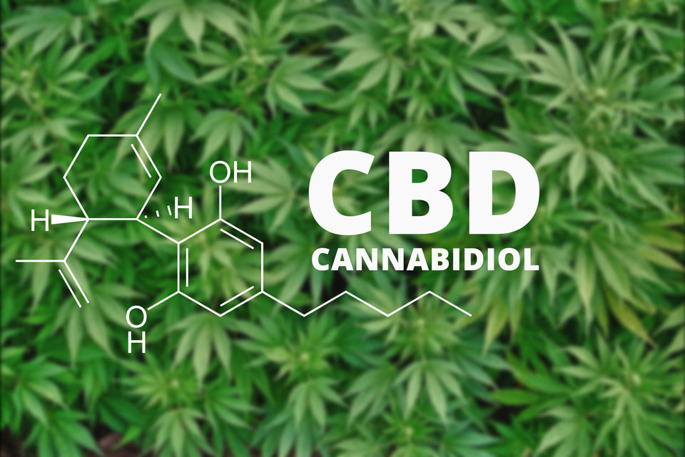 IS CBD AN EFFECTIVE APPETITE STIMULANT FOR ELDERLY PEOPLE?