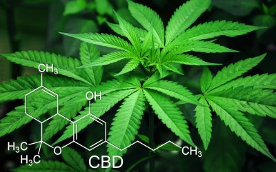 Can CBD Reduce THC Dependency?