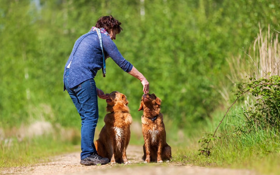 Keeping Your Dog Happy & Well